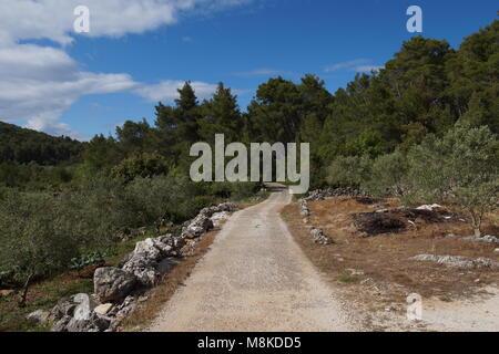 Dalmatian olive groves - Stock Photo