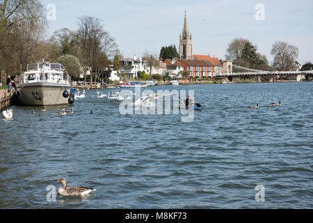 A view of the river at Marlow with an interaction with a boat and some swans - Stock Photo
