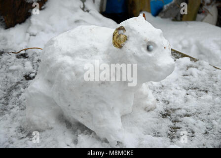 A rarely-seen 'Russian snow-pig', the original 'mini Beast from the East' - Stock Photo