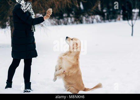 Picture of girl with labrador on walk in winter park - Stock Photo