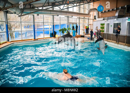 Woman swims with dolphin in dolphinarium - Stock Photo