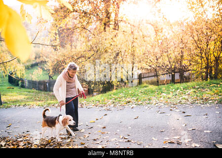 An elderly woman with dog on a walk in autumn nature. - Stock Photo