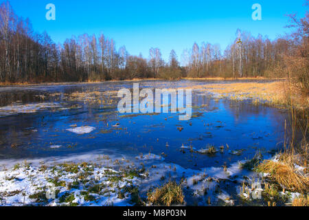 Panoramic view of flooded and frozen grassy forest meadows in early spring season in central Poland mazovian plateaus - Stock Photo