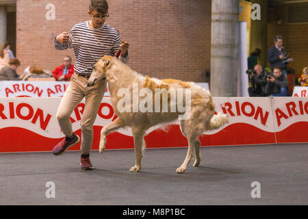 22th INTERNATIONAL DOG SHOW GIRONA March 17, 2018,Spain, Russian wolfhound - Stock Photo