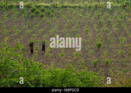 A couple of Burmese boys, teenagers, youths walking on the soil of a ploughed field, with shrubs growing, in a rural - Stock Photo