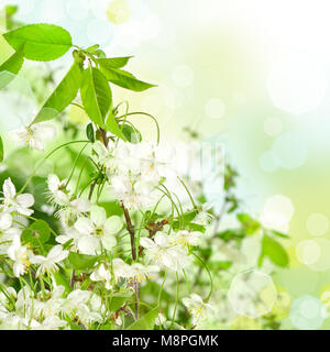Abstract floral background - beautiful spring blossoms - Stock Photo
