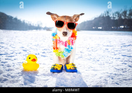 cool funny freezing icy dog in snow with sunglasses and flower chain , waiting for the summer to come very soon - Stock Photo
