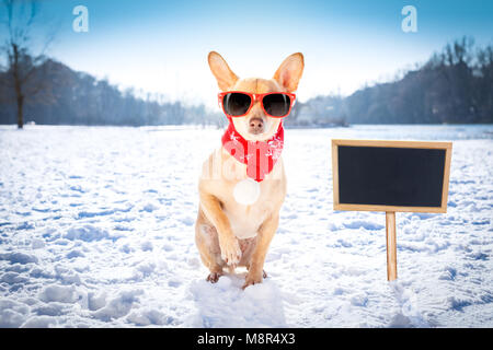 cool funny freezing icy dog in snow with sunglasses and scarf, sitting and waiting to go for a walk with owner, - Stock Photo