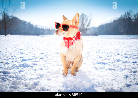 cool funny freezing icy dog in snow with sunglasses and scarf, sitting and waiting to go for a walk with owner - Stock Photo
