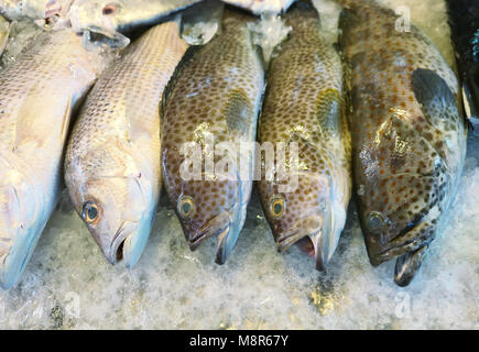 Fresh groupers, snappers on ice - Stock Photo