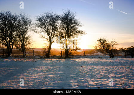 Bare trees on snowy field against sky during sunset - Stock Photo