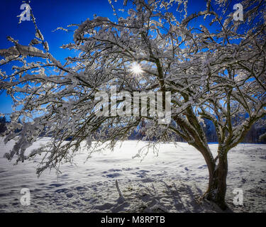 DE - BAVARIA: Wintertime near Bad Toelz  (HDR Image) - Stock Photo