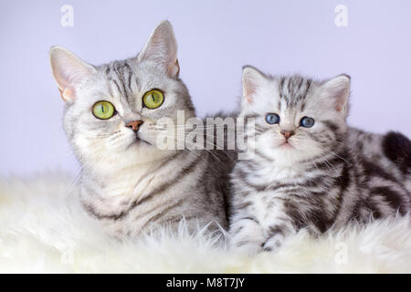 Mother cat lying with young kitten on sheep fur - Stock Photo