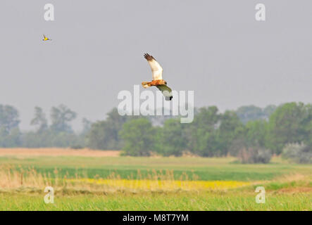 Bird image by Hans Germeraad - Stock Photo