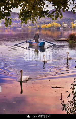 Fisherman on traditional wooden boat accompanied by swans, in lake Orestiada in Kastoria city, Western Macedonia - Stock Photo