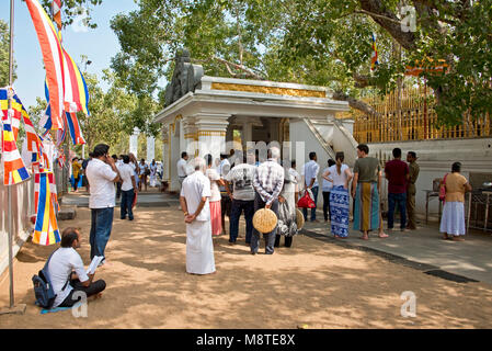 Local people and pilgrims praying and giving flower gifts at the Jaya Sri Maha Bodhi temple in Anuradhapura, Sri - Stock Photo