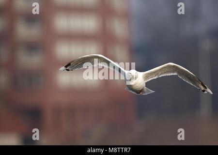 vliegen boven nederland