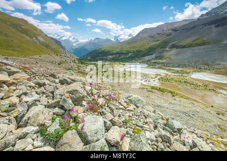 Glacial river running down the valley towards Zermatt town. Alpine flowers dotting rocks and boulders. Snowcapped - Stock Photo