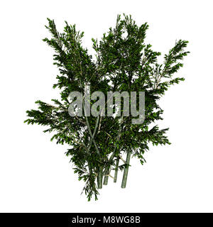 3D rendering of a creosote bush or Larrea tridentata or