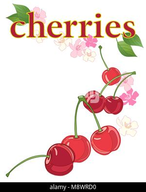 a vector illustration in eps 10 format of an advert for fresh cherries with blossom and foliage on a white background - Stock Photo