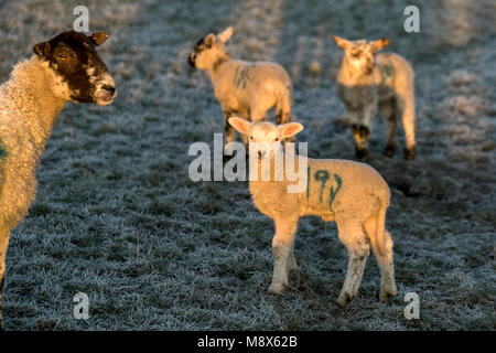 Tarleton, Lancashire, UK Weather.  21st March 2018.  Cold, Frosty start to the day over rural Lancashire, with overnight - Stock Photo