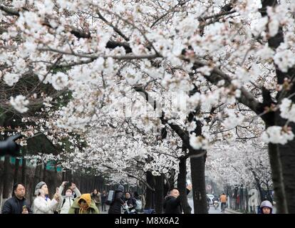 Nanjing, China's Jiangsu Province. 21st Mar, 2018. Tourists view cherry blossoms in Nanjing, capital of east China's - Stock Photo