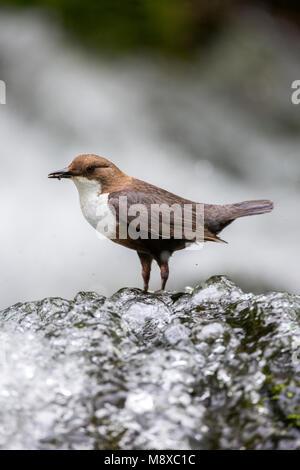 Bird image by Oscar Diez - Stock Photo