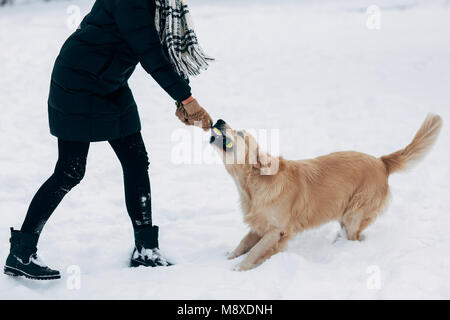 Photo of woman playing with labrador in winter park - Stock Photo