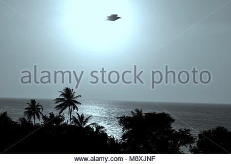 this is a photo of the sunset over the ocean with shadow plants in the foreground and a black bird in front of the - Stock Photo
