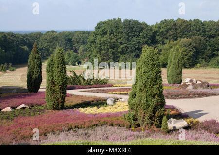 The heather garden with flowering heather, Schneverdingen, Lüneburg Heath, Lower Saxony, Germany, Europe  I  Der Heidegarten mit blühender Heide,  Sch