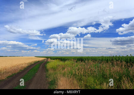 Road between the wheat and sunflower fields under cloudy sky - Stock Photo