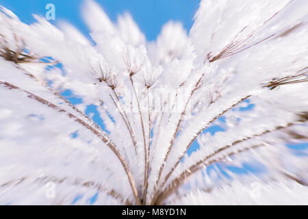 Plant in frost against blue sky close up. Blurred background with selective focus and ultra wide angle distortion - Stock Photo
