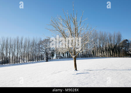 Snow covered tree in winter landscape, Burwash, East Sussex, England, United Kingdom, Europe - Stock Photo