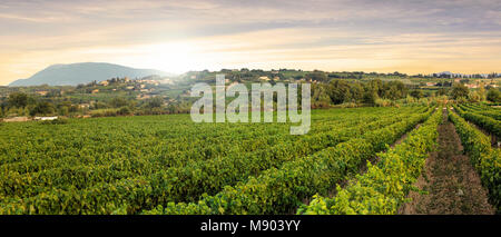 Vineyards in Provence in the South of France - Stock Photo