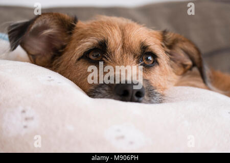 dog relaxing on the sofa - Stock Photo