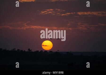 Sun rising over savanna.  Masai Mara game reserve. Kenya. - Stock Photo