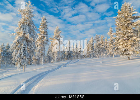 Snowmobile track in the snow with snowy spruce trees and blue skye with clouds and warm light, Gällivare, Swedish Lapland, Sweden - Stock Photo
