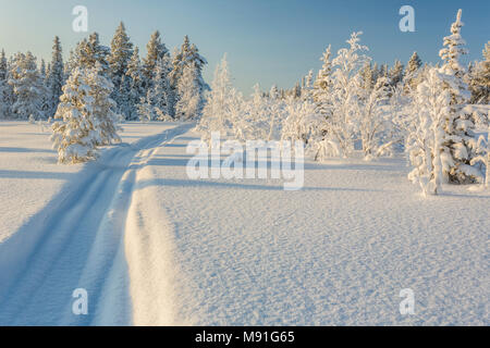 Snowmobile track in the snow with snowy spruce trees and blue skye and warm light, Gällivare, Swedish Lapland, Sweden - Stock Photo