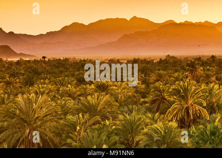 Date palms at sunset, Sierra de Guadalupe in distance, Mulege, Baja California Sur, Mexico - Stock Photo