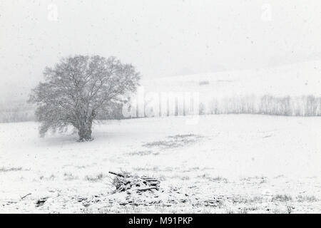 snowstorm near Dunsford Devon, snow blast, snow squall white-out,snowflakes, flakes, snowdrift, snowfield, snowpack snowfall, snowstorm, blizzard - Stock Photo