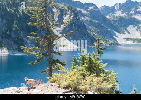 Pristine alpine mountain lake in summer surrounded by evergreen pine tree forest mid day sun with happy dog ready to go swimming. - Stock Photo