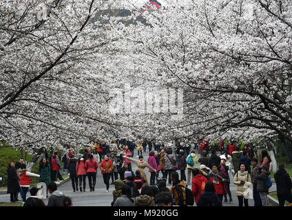 Nanjing, China's Jiangsu Province. 21st Mar, 2018. Citizens and students view cherry blossoms at Nanjing Forestry University in Nanjing, capital of east China's Jiangsu Province, March 21, 2018. Credit: Sun Can/Xinhua/Alamy Live News - Stock Photo