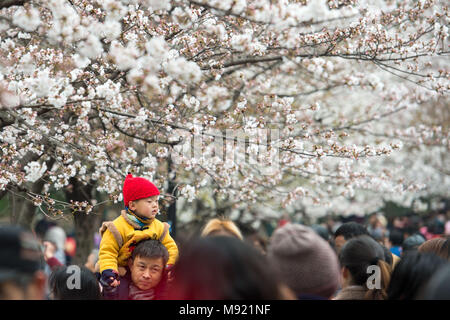 Nanjing, China's Jiangsu Province. 21st Mar, 2018. People enjoy the view of cherry blossoms at Jimingsi Road in Nanjing, capital of east China's Jiangsu Province, March 21, 2018. Credit: Li Bo/Xinhua/Alamy Live News - Stock Photo