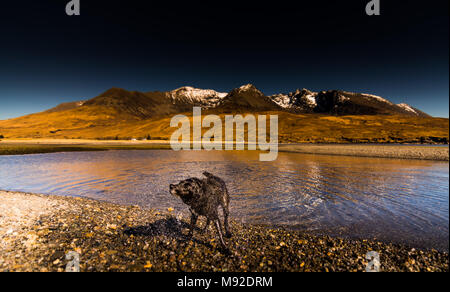 Dog on Spin Cycle at Glen Brittle Beach - Stock Photo