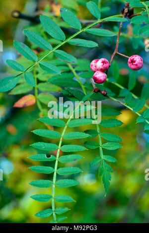 Autumn Plants, Grasses & Seedheads - Stock Photo