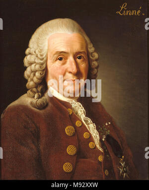 Carl Linnaeus (1707 – 1778), Carl von Linné, Swedish botanist, physician and zoologist - Stock Photo
