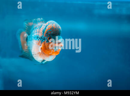 Close up of different types of fishes in a aquarium. - Stock Photo