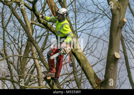Tree Removal, equipment, lop, lopping, gardener, Pruning, Felling, tree, work, trim, tool, lopping branches, Crown Reduction, Crown Thinning by professional arborist, skilled tree surgeons working to BS 3998 (Recommendations for Tree Work) in Southport, Merseyside, UK - Stock Photo