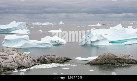 A Kelp Gull overlooks a Gentoo Penguin colony on the rocks by Iceberg Alley in Antarctica. Seals rest on a small iceberg in the centre. - Stock Photo