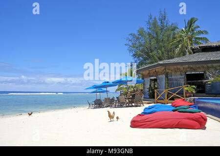 Chickens walks on empty tropical Island beach in Rarotonga, Cook Islands. - Stock Photo